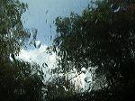Certaines aiment la pluie...